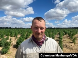 Zimbabwe farmer Jesper Kirk says he started growing hemp for exporting as it has a stable market. (Columbus Mavhunga/VOA)