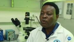 COVID-19: Investigadores quenianos testam medicamento à base de ervas