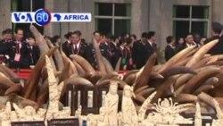 Manchetes Africanas 6 Janeiro 2014