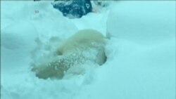 Hayvanat Bahçesi'nde Kar Neşesi