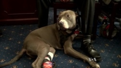 US Group Calls for Greater Care of Military Dogs