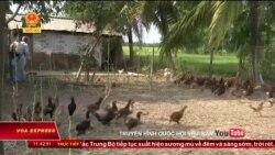 Cúm gia cầm H5N1 xuất hiện ở Hà Nam