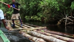 Curbing Deforestation