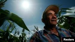 Archivo - El agricultor Santiago Valladares es visto frente a su cosecha de maíz en Jutiapa, Guatemala, el 28 de julio de 2005.