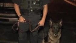 警官警犬好搭档(二) :迪克森-Rocko在执行巡逻和侦查任务