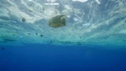 美国万花筒:新纪录片《塑料海洋》揭示污染触目惊心