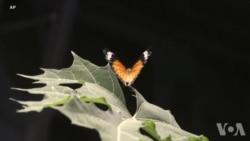 减少修剪让花草疯长:拯救对人类有益的昆虫