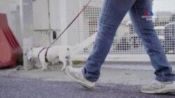 Հռոմում շների տերերը մեղադրվում են տանը մնալու կանոնները չարաշահելու մեջ