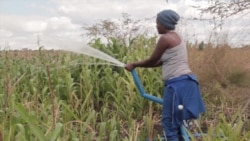 Malawi Agro-Entrepreneur Blazes New Trail for Youth