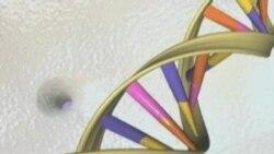 美高院:自然生成人类基因不受专利保护