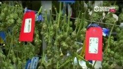 Семь штатов приняли решение смягчить правила обращения с марихуаной