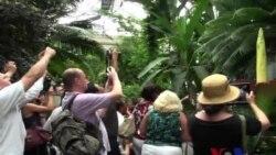美国家植物园恶臭巨花令游客趋之若鹜