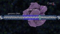Genetik xəstəliklər gen dəyişməsi yolu ilə müalicə oluna bilər