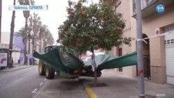İspanya'da Ağaç Sallayan Traktör Sosyal Medyayı da Sallıyor
