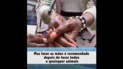 COVID-19: Factos sobre animais de estimação