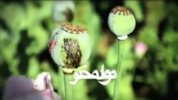 Narcotics in Afghanistna - Addiction in Balkh