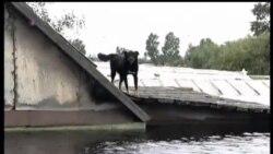 2013-09-08 美國之音視頻新聞: 俄羅斯遠東地區洪災災情嚴重