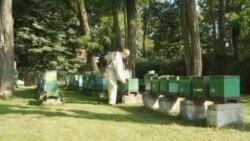Naučnici u Poljskoj pronašli lijek za spašavanje pčela