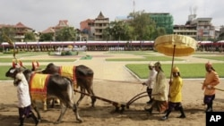 A Cambodian Prince Norodom Chakravuth, third from right, holds plow handles as he takes part in an annual royal plowing ceremony in Phnom Penh, Cambodia, Wednesday, May 9, 2012. The ceremony was held to mark the start of rice-farming season.