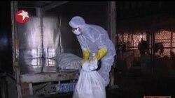 2013-04-13 美國之音視頻新聞: 北京發現首宗人類感染H7N9禽流感病例