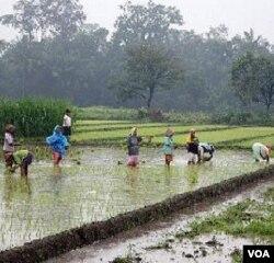 Pertanian yang membutuhkan banyak air sebaiknya dikembangkan di daerah yang ketersediaan airnya juga banyak.