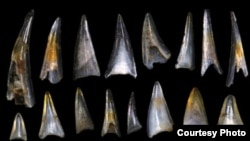 Fish teeth and shark scales from around the mass extinction event 66 million years ago. (Credit: E. Sibert on Hull lab imaging system, Yale University)