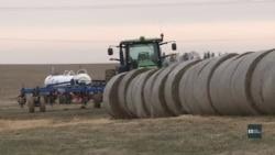Як торговельна війна між США та Китаєм впливає на фермерів. Відео