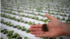 Singapore Seeks to Increase Local Food Production with Rooftop Farming