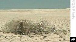 埃塞总理表示可能会缺席全球气候变化论坛