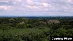 Scientists Find Megadiversity at Top of Amazon Forest