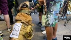 化名Coffee的元朗居民7月19日帶著背部貼上印上7-21白紙的狼狗上街,他表示要帶狗保護市民。(美國之音湯惠芸)