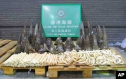 An assortment of rhino horns and ivory products smuggled into Hong Kong from South Africa in November last year. A wildlife protection expert says some South African customs officials are unable to identify rhino horns…