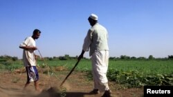 Sudanese farmers prepare their land for agriculture on the banks of the river Nile in Khartoum, November 2009 file photo.