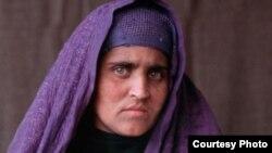 شربت گل مهاجر افغان که در سال ۱۹۸۴ بعد از نشر عکسش در مجلۀ نشنل جیوگرافیک شهرت جهانی یافت