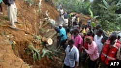 Residents of Bududa cut through trees and timber on June 26, 2012 as they try to get to victims of a mudslide in eastern Uganda, about 200 kilometers from the capital Kampala.