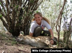 Biologist Jennifer Smith, a Mills College assistant professor, has studied animals' leadership skills. She's shown with a tranquilized spotted hyena in Kenya in an undated photo.