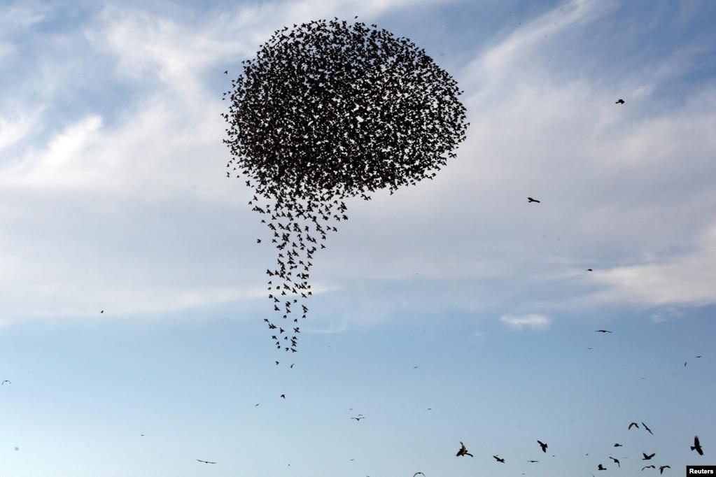 이스라엘 남부 라하트 인근 하늘에 철새들이 무리지어 날고 있다.