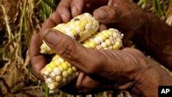 Las autoridades advierten sobre el deterioro de la seguridad alimentaria en Centroamérica debido a la sequía.