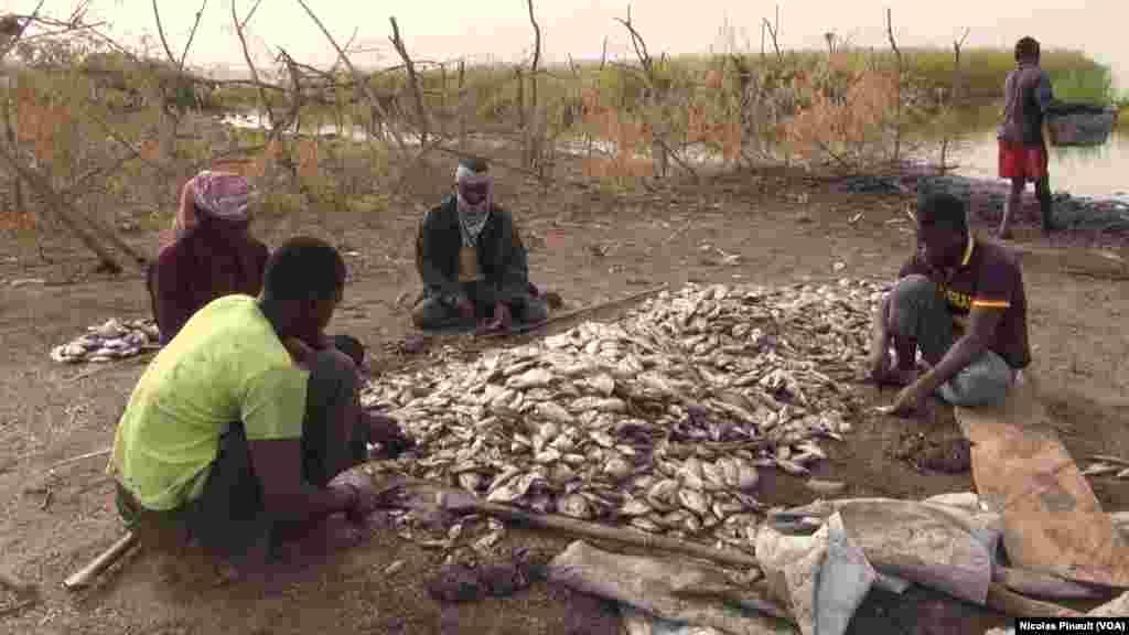 Des pêcheurs nettoient leurs poissons sur le lac, Tagal, Tchad, le 24 avril 2017 (VOA/Nicolas Pinault)