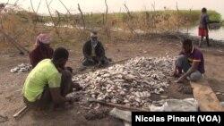 Des pecheurs nettoient leurs poissons sur le lac, Tagal, Tchad, le 24 avril 2017 (VOA / Nicolas Pinault)