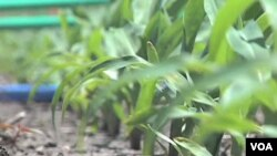 Karena hujan dan cuaca dingin yang lebih panjang, para petani AS baru saja memulai musim bertanam di tanah pertanian mereka (11/5).