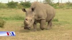 Tê giác trắng Bắc Phi Sudan qua đời và việc bảo tồn loài tê giác