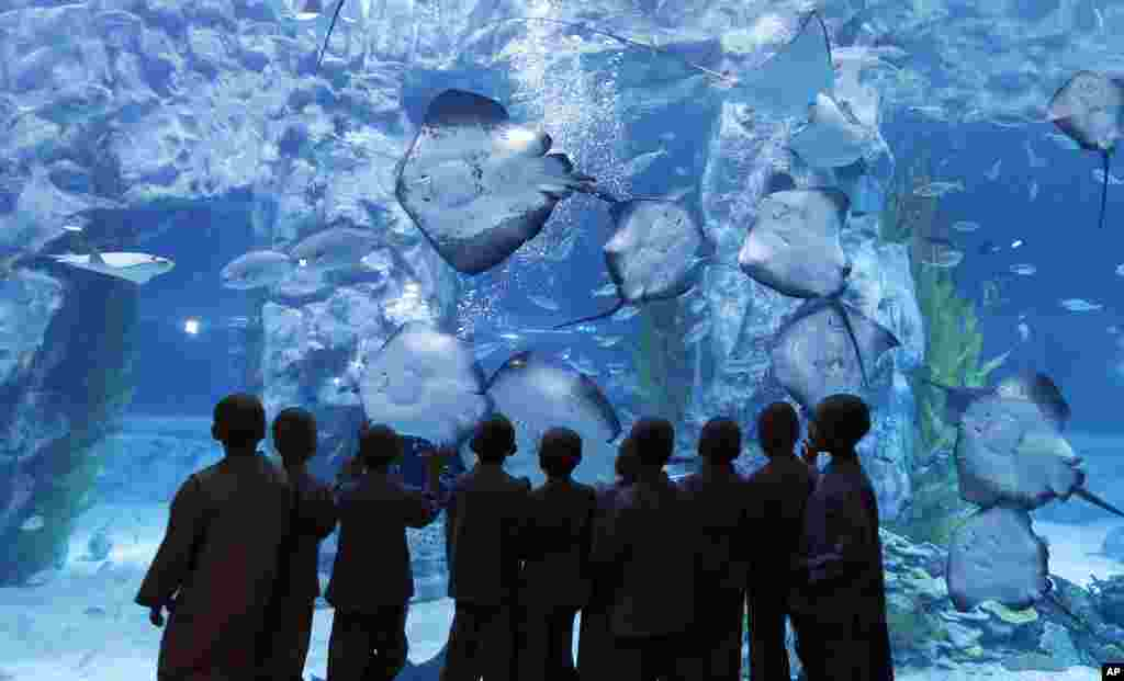 Shaven-headed children look at rays at the Lotte World Aquarium in Seoul, South Korea. Ten children have an experience a monk's life for two weeks to celebrate Buddha's upcoming 2,560th birthday on May 14.