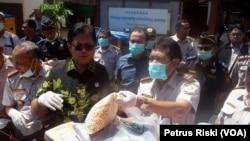 Pemusnahan benih jagung asal Thailand yang mengandung bakteri dan hama penyakit di Surabaya, 24 Agustus 2017. (VOA/Petrus Riski)
