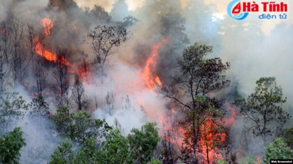 Cháy rừng ở Hà Tĩnh. Photo: Báo Hà Tĩnh