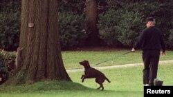 Президент Клінтон тримає свого пса бадді у той час, коли той хоче погнатися за білками, 23 грудня 1997 року