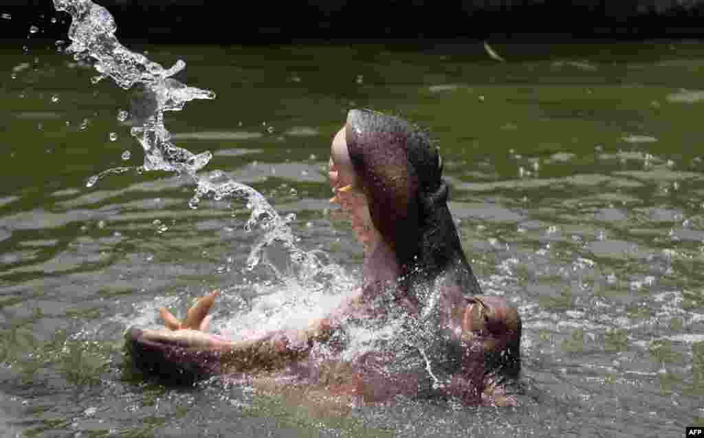 Gippopotamus, Hindiston