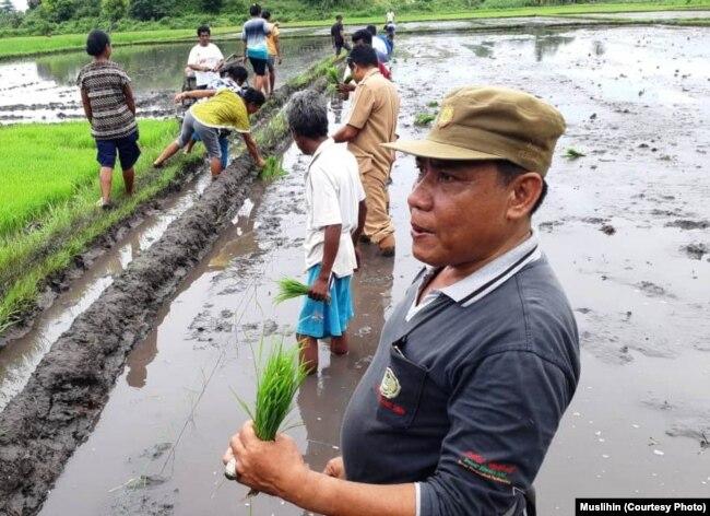 Muslihin (baju abu-abu) memberi contoh penerapan metode SRI ke petani Sumba (courtesy: Muslihin)