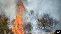 加州莱特伍德森林大火(资料照片)