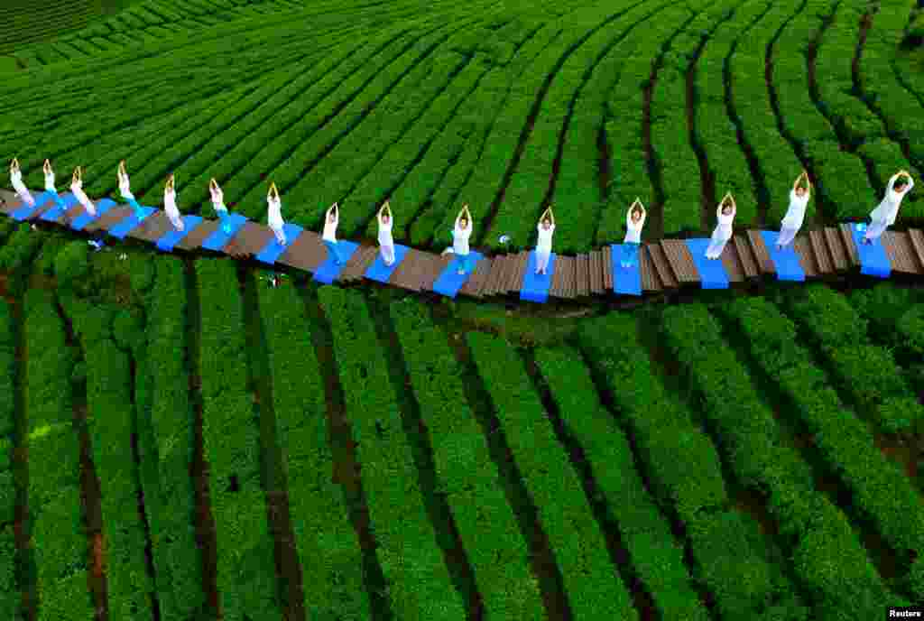 People perform yoga in a tea plantation in Enshi, Hubei province.